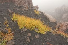 Yellow Moss on Mount Etna. The Etna volcano crater. Black Volcanic Earth, Volcanic Lava and Stones. Dense Fog on Mount Etna. Moss on the Etna volcano. The Etna stock photos
