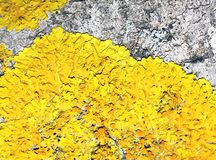 Yellow moss on old tree Stock Photography