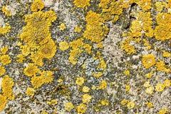 Yellow moss on stone surface Stock Image