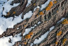 Yellow moss on tree bark. Close-up background texture pattern Royalty Free Stock Photos