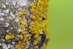 Yellow moss on a tree Stock Images