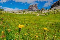 Yellow mountain flowers in Dolomites, Italy Stock Photography