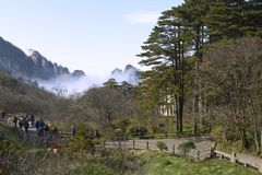 Yellow Mountain - Huangshan, China Stock Image