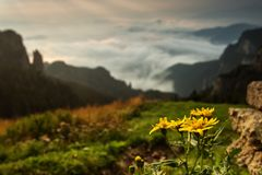 Yellow mountains flowers with beautiful landscape in background.  royalty free stock photos
