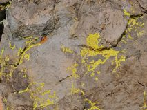 Multi color and types Crustose Lichen or algae on a desert sandstone boulder in Southwestern Utah, USA near St. George royalty free stock photography