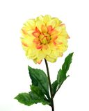 Yellow Mum. Yellow fake chrysanthemum isolated over white Stock Image