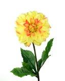 Yellow Mum. Yellow fake chrysanthemum isolated over white stock image