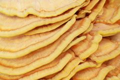 Yellow mushroom parasite background Stock Photo
