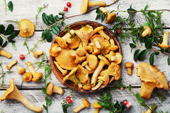 Yellow mushrooms chanterelle cantharellus cibarius with forest plants on white wooden table overhead view. Royalty Free Stock Images