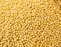 Yellow Mustard Seed Royalty Free Stock Photo