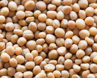 Yellow Mustard Seed Royalty Free Stock Images
