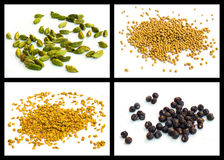Yellow mustard seed, seed of hay greek, cardamom, juniper Stock Images