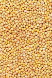 Yellow mustard seeds Stock Images