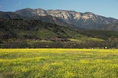 Yellow mustard and Topa Topa mountains in spring, upper Ojai, California, USA Stock Photo