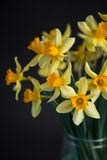 Yellow narcissus or daffodil flowers on black background. Selective focus. Place for text. Stock Photography
