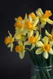 Yellow narcissus or daffodil flowers on black background. Selective focus. Place for text. Stock Photos