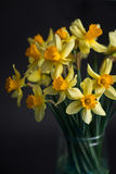 Yellow narcissus or daffodil flowers on black background. Selective focus. Place for text. Stock Photo