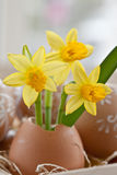 Yellow narcissus in egg shell. And painted easter eggs Royalty Free Stock Photo