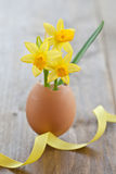 Yellow narcissus in egg shell. On rustic wood Royalty Free Stock Photo
