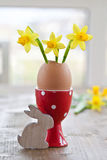 Yellow narcissus in egg shell. In decorative egg cup Royalty Free Stock Image