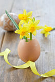 Yellow narcissus in egg shell. On rustic wood Stock Photography