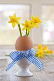 Yellow narcissus in egg shell. In decorative egg cup Royalty Free Stock Photography