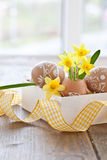 Yellow narcissus in egg shell. And painted easter eggs Royalty Free Stock Photos