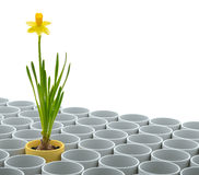 Yellow narcissus flower and flowerpot set Stock Images
