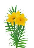 Yellow narcissus flowers bouquet isolated on a white Stock Photography