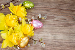 Yellow narcissus flowers with catkins Royalty Free Stock Photos