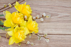 Yellow narcissus flowers with catkins Stock Image