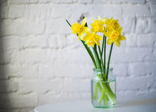 Yellow narcissus in glass jar. Yellow daffodil in glass vase brick wall background Royalty Free Stock Photography