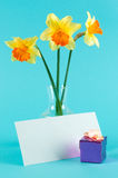 Yellow narcissus in vase with card and gift-box Royalty Free Stock Image