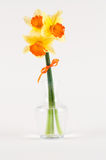 Yellow narcissus in vase  on white Stock Photography