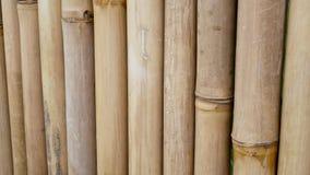 Bamboo fence texture closeup. Bamboo wall background. Yellow nature bamboo fence texture closeup. Bamboo wall background stock video