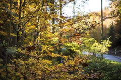 Yellow, Nature, Leaf, Autumn royalty free stock photo