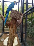 Golden blue macaw stock photos