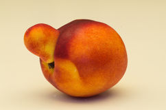 Yellow nectarine fruit with abnormality Royalty Free Stock Photography