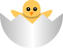 Yellow newborn chicken in the broken egg shell Royalty Free Stock Photography