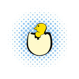 Yellow newborn chicken hatched from the egg icon. In comics style on a white background Royalty Free Stock Images