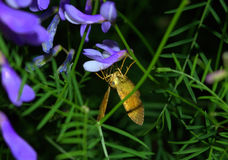 Yellow night butterfly upside down Stock Photo