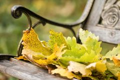 Yellow oak leaves on an ancient bench in the autumn city park. stock images