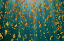 Yellow oak leaves autumn blue background. Yellow falling oak leaves autumn blue background royalty free stock photo