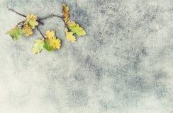 Yellow oak leaves stone texture Autumn background Stock Photos