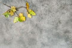 Yellow oak leaves vintage chalkboard. Autumn background Stock Photography