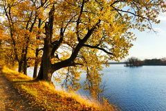 Yellow oak trees on Svet Pond embankment in Trebon Stock Image