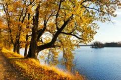 Yellow oak trees on Svet Pond embankment in Trebon Stock Image