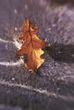 Yellow oalk leaf in ice Royalty Free Stock Photography