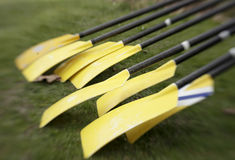 Yellow Oars Before Race. Eight yellow oars, lined up at a regatta, are ready for the crew race to begin. The lens distortion is a result of using a Lensbaby Stock Images