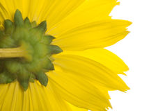 Yellow och green Arkivbilder